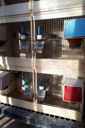 Mise en cage des NR Mos et NR Mos Cobalt