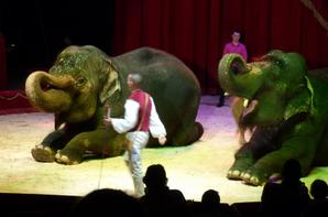 LES ELEPHANTS DU CIRQUE MEDRANO !!!