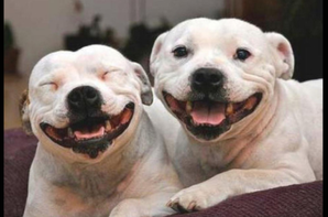 Les Dogs