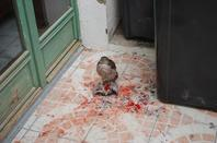 Des attacks encore des attacks !!