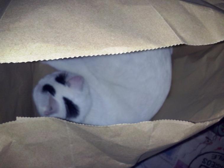 Abba et les sacs ;)