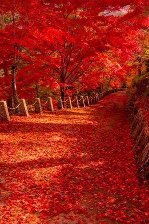 En automne, nous apercevons des je ne sais quoi qui nous émerveillent