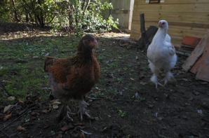 Mes oiseaux  ☾