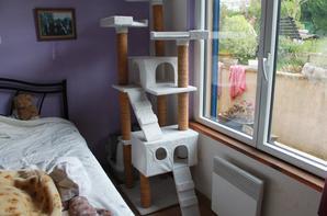 L'arbre à chats 2016