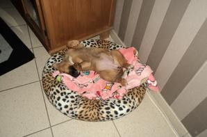 my dogs , mijn honden