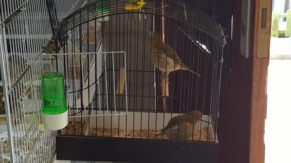 quelques fifes foncé du premier tour en cage d'expo