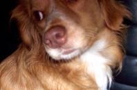 GAYA portrait de chien !!!