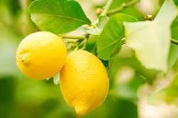 DIY   le citron , que de vertus !♥