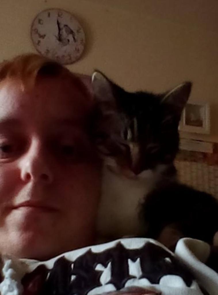 mon petit chaton que jai trouve dans ma résidence