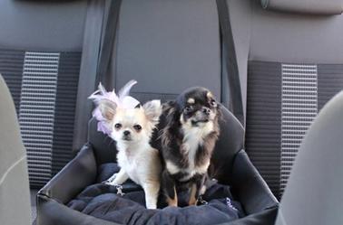 si ge voiture ultraconfortable petit chien blog de liberty ice t. Black Bedroom Furniture Sets. Home Design Ideas