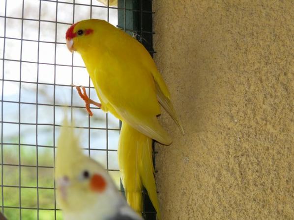 Deux petites femelles à céder