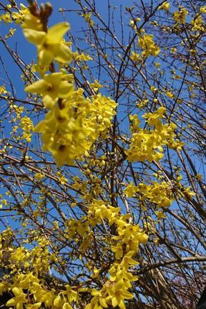 Enfin le printemps est de retour.