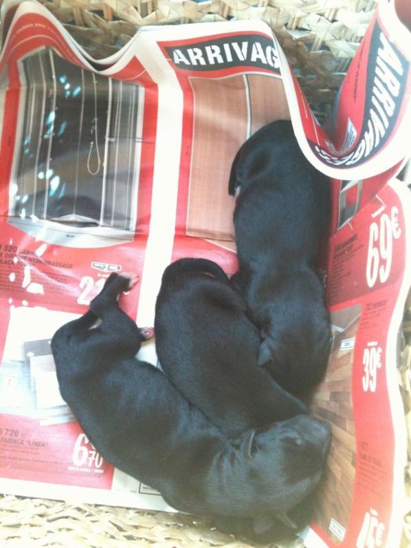 Les bébés d'Alta sont nés :-)