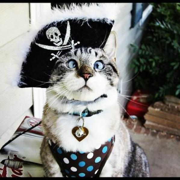 HALLOWEEN - chat PIRATE et chat SUPERMAN