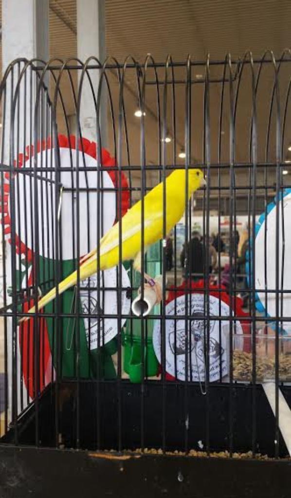 Deux oiseaux de trés bonnes qualites un Italien et un belge