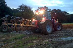 semis et labour de blé