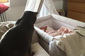 Fifi, alias Figaro ou Fidji 5 ans, nous à quitter ce matin au paradis des chats