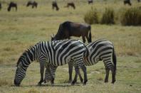 Regards de Tanzanie