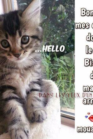 "ah ben ""chat alors """""
