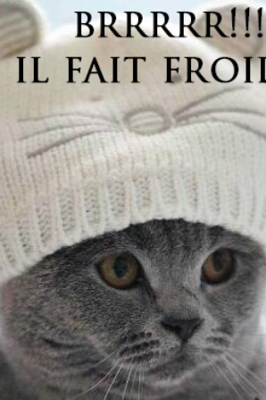 """ah chat alors """"""""chat caille """""""
