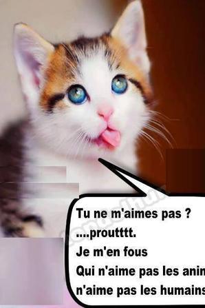 "ah ben chat "" alors """