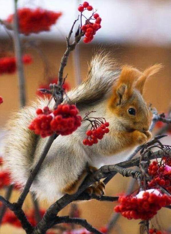 clin d'oeil a NUTSY notre gentil ecureuil