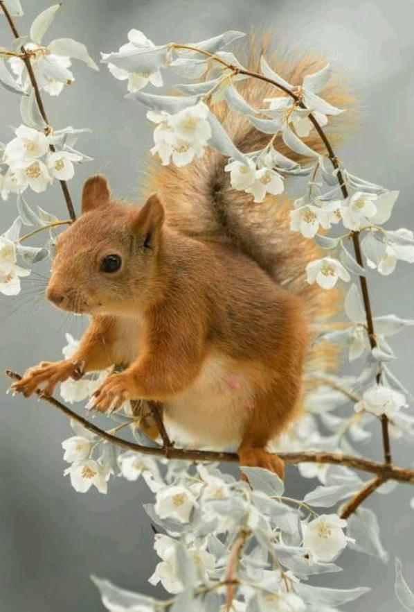 clin d'oeil de loune a mon petit ecureuil''nutsy
