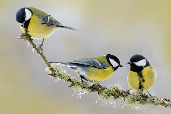 Avoir des oiseaux de passage dans son jardin c'est assez banal et cela paraît une évidence. C'est vrai ! Mais certains oiseaux sont plus « utiles » que d'autres et se transforment en véritables alliés. Je vous invite à en (re)découvrir cinq que vous avez sûrement déjà accueillis chez vous. C'est parti !