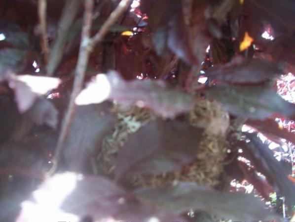 il y a un nid de chardon chaque annèè
