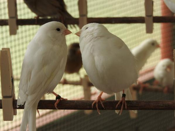 couple blanc