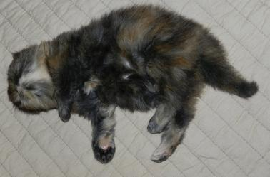 Dans le midi, l'après midi....on fait la sieste !!!!