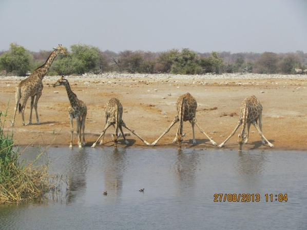 The big four and the tallest mammal.