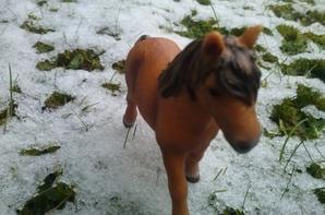 on profite des dèrnières neiges avant le primtemps ( shooting de trèfle )