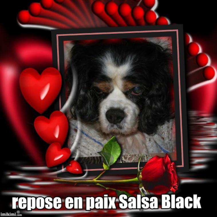 Salsa Black du puits des sortilèges