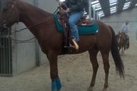 Mes chevaux, Tu vois Ursula, Nana ou encore Nadine