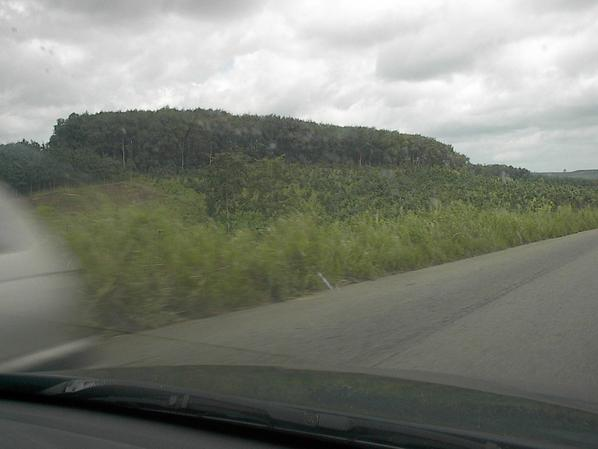 Plantations d'Hévéas