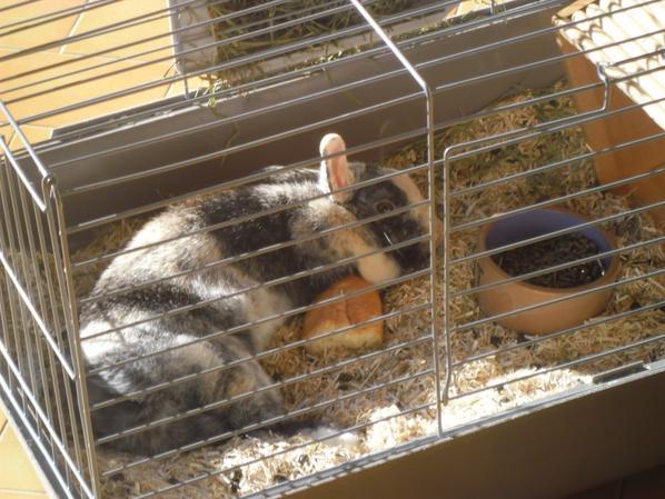Noisette dans sa cage
