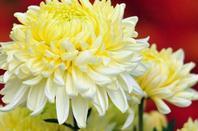 Flori de toamna!