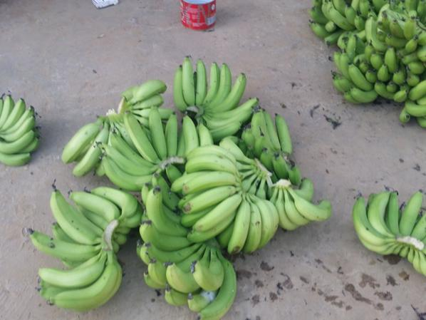 Nos bananes du jardin familliale à foukara