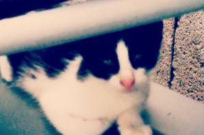 My Kitten <3