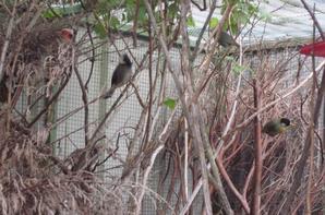 petite visite du super élevage de chez bernard