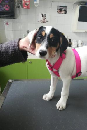 Pixie et Zina, chez le vétérinaire pour leur rappel de vaccins