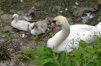 Dring Drink, l'apéro des Cyclistes namurois au port de plaisance ne semble pas inquiéter la faune avicole des frayères jamboises