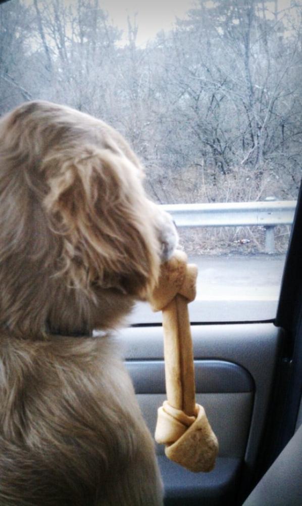 en route pour le Veto avec Minni
