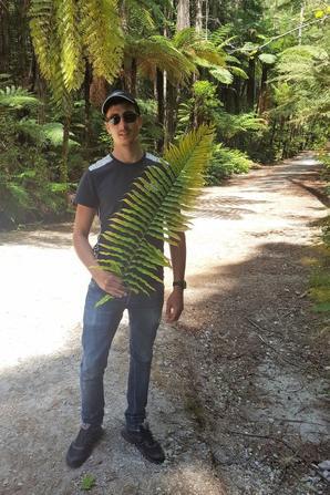 # redwoods - Whakarewarewa Forest