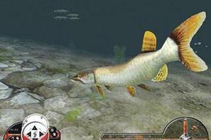 Kids Fishing Game, Fish Games For Kids