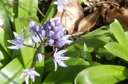594  Luchon : fleurs