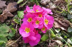 1058  Fleurs de printemps