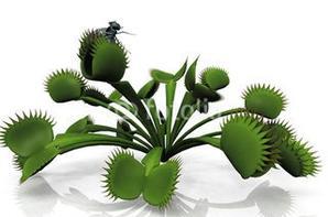 plantes carnivores et toiles d 'araignée
