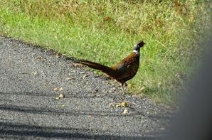 on fait de drole de rencontre sur les petites routes de campagne lol